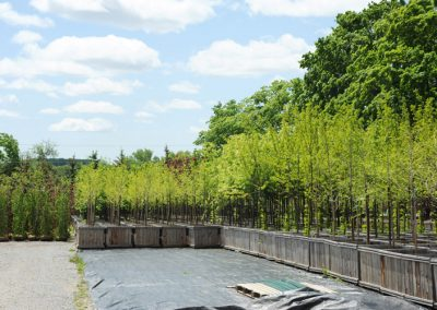 commercial tree nursery markham