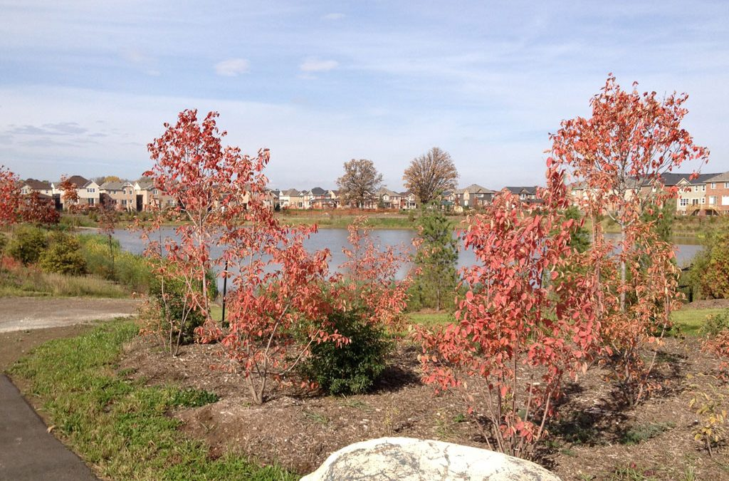 Storm Water Management – Landscaping and Pond Planting