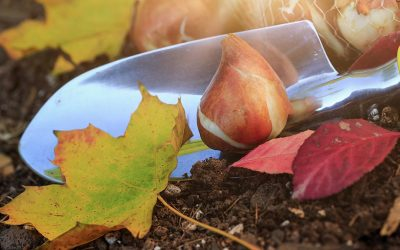 Why We Love to Plant In The Fall!