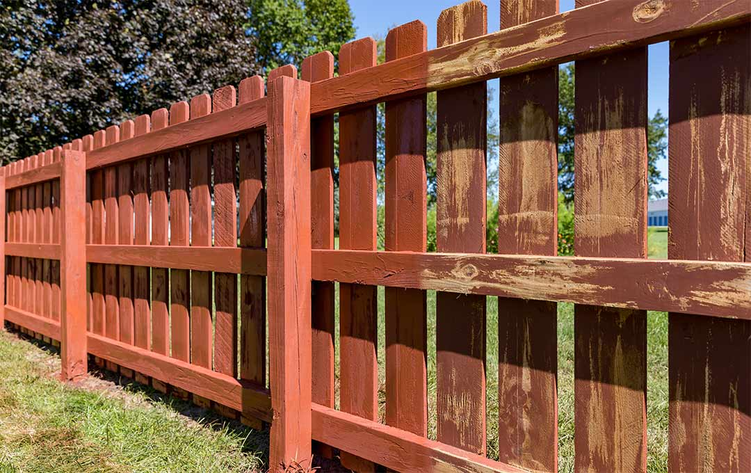Bringing New Life into an old Fence or Deck