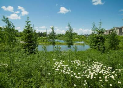St. John's Forest